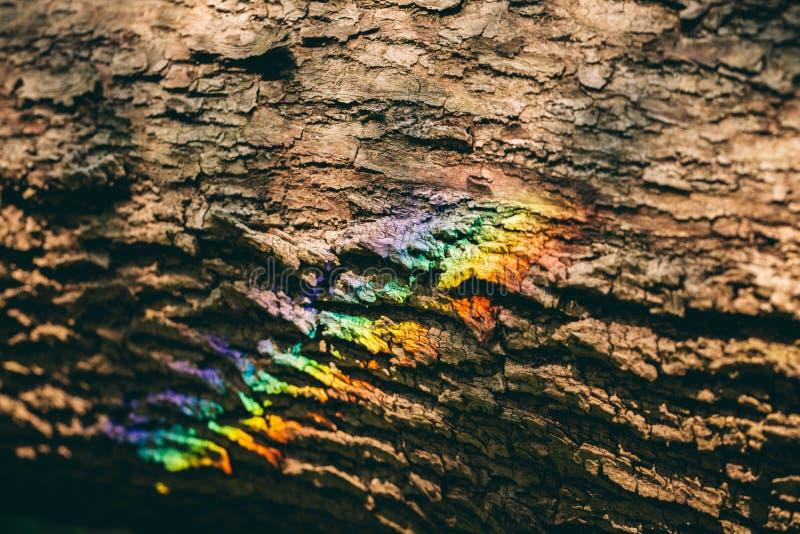 Arc-en-ciel coloré réfléchissant sur une écorce d'un arbre photo libre de droits