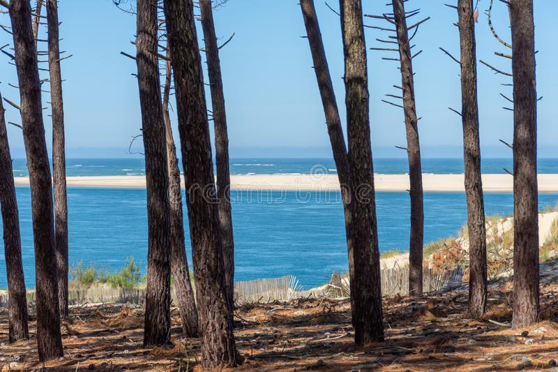 Arcachon fjärd, Frankrike: pinjeskogen framme av sandbanken av Arguin och nästan dyn av Pilat royaltyfria bilder