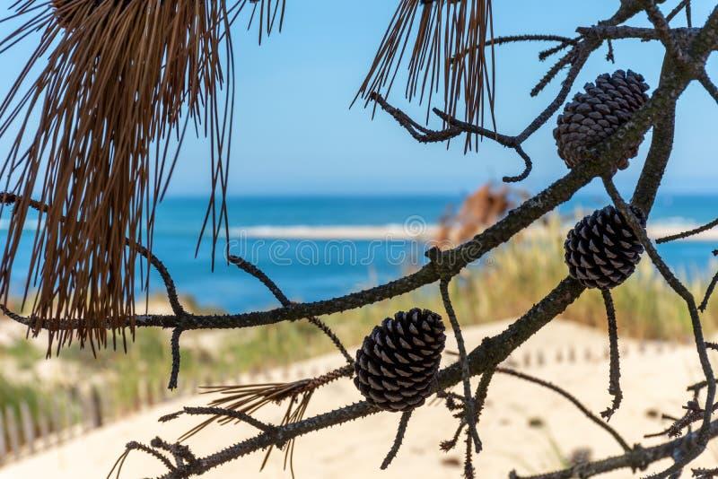 Arcachon fj?rd, Frankrike: stranden Petit Nice framme av sandbanken av Arguin och n?stan dyn av Pilat arkivbilder