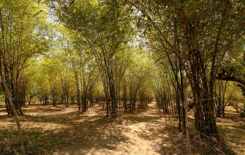 Arcada de bambú en las Filipinas fotografía de archivo libre de regalías