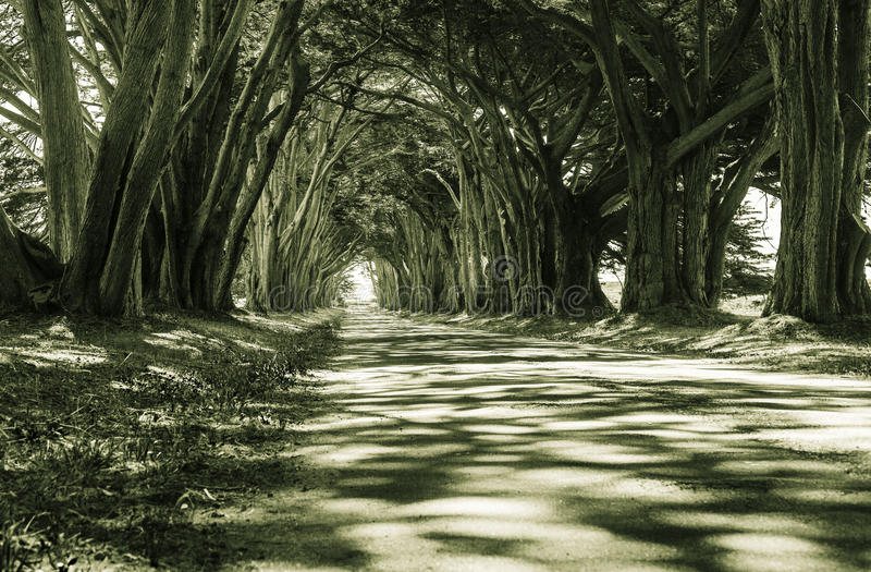 Arcada del árbol de Cyress fotografía de archivo