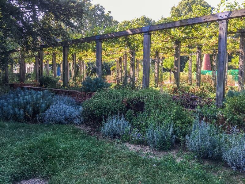 Arcada del viñedo con la frontera de la lavanda en Parc de Bercy, París, Francia foto de archivo