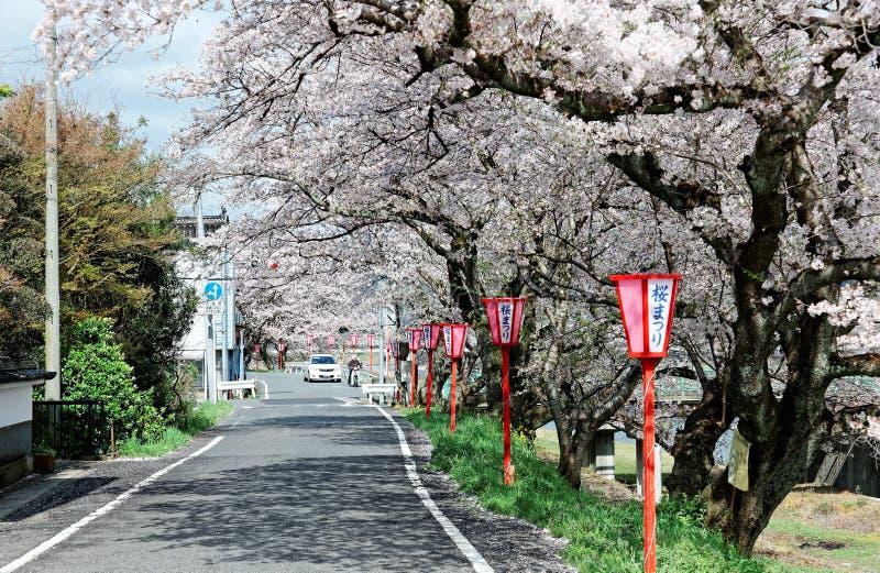 Arcada romántica de las flores de cerezo flourishing (Sakura Namiki) y de la lámpara japonesa tradicional foto de archivo