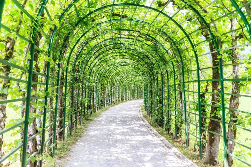 Arcada verde em um jardim foto de stock royalty free