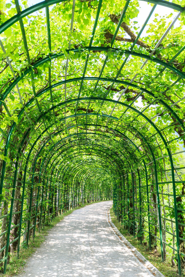 Arcada verde em um jardim fotos de stock
