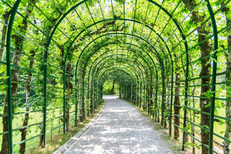 Arcada verde em um jardim fotos de stock royalty free