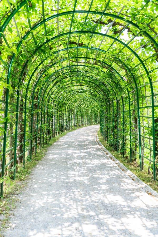 Arcada verde em um jardim imagens de stock