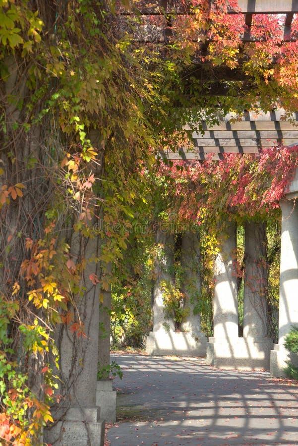 Arcade verte en parc en automne photo stock