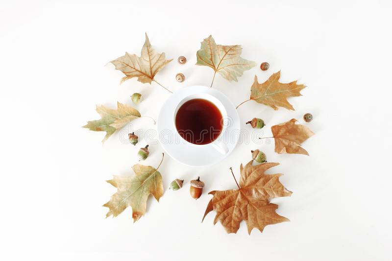 Arce del otoño y composición de las hojas del roble con la taza de té y las bellotas en el fondo blanco Foto común diseñada Endec foto de archivo