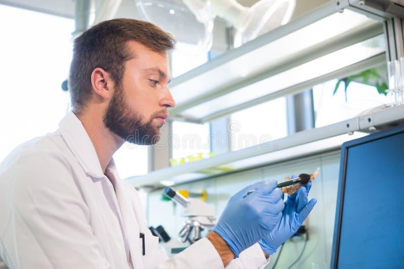 Archäologe, der im natürlichen Forschungslabor arbeitet Laborassistenzreinigungstierknochen Archäologie, Zoologie stockfotos