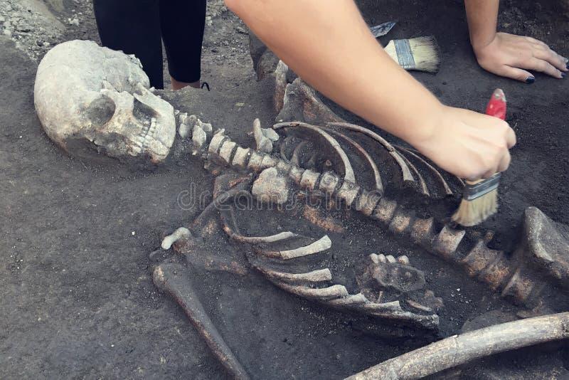 Archäologische Aushöhlungen Archäologe mit Werkzeugen leitet Forschung auf menschlicher Beerdigung, Skelett, Schädel lizenzfreies stockfoto