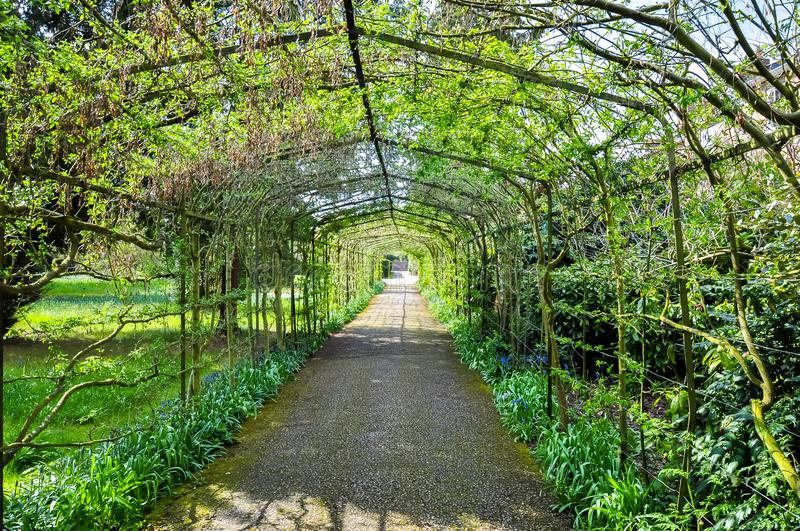 Arch alley in Hampton Court Garden, London, UK royalty free stock photo