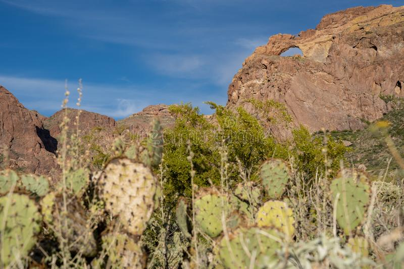 Arch Canyon along Ajo Mountain Drive in Organ Pipe Cactus National Monument in Arizona. Beavertail cactus defocused in foreground.  royalty free stock image