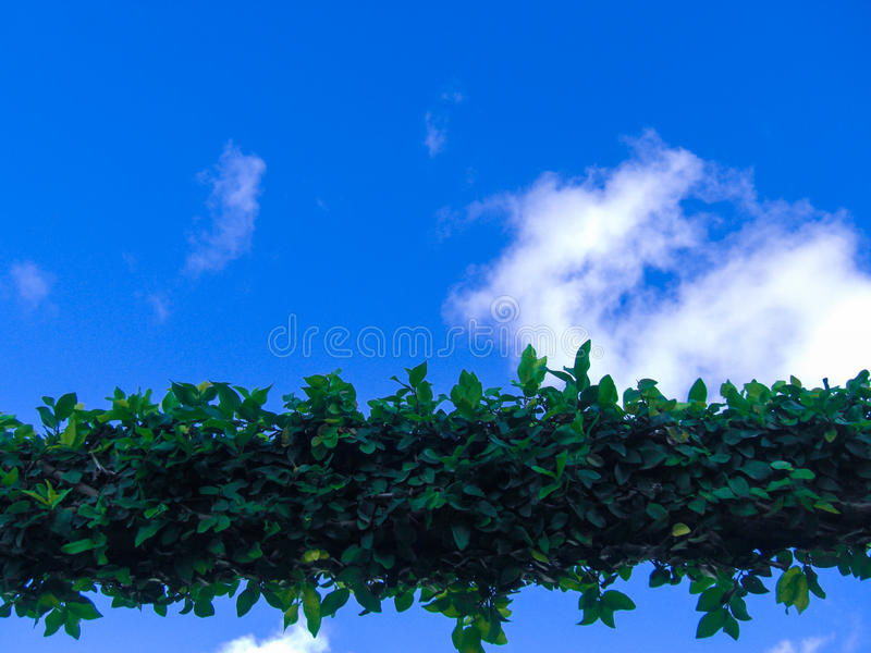 Arch of foliage royalty free stock photography