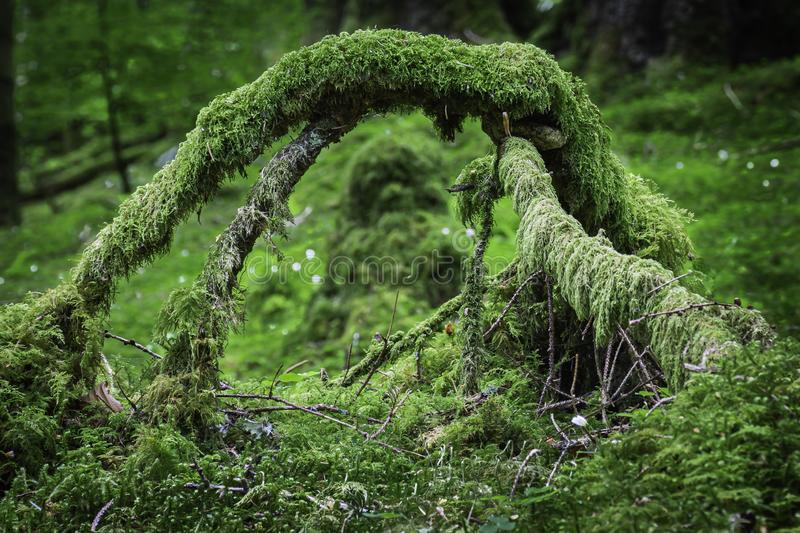 Arch formed from branches covered with moss stock photos