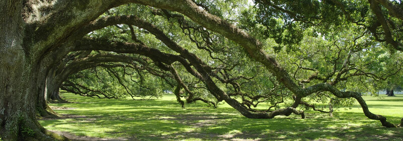 arch live oak southern 免版税库存照片