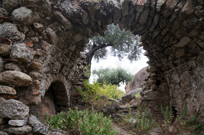 Arch and olive tree stock photo