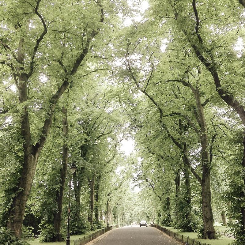 Arch of trees royalty free stock image