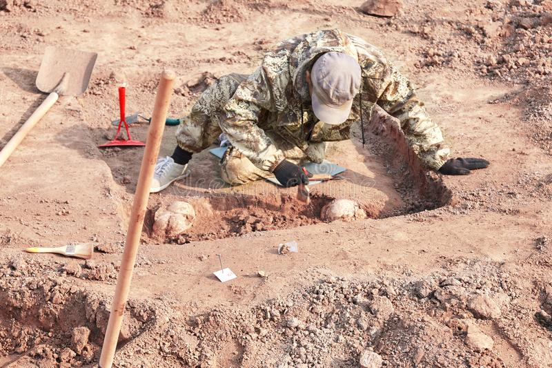 Archaeological excavation. The archaeologist conducting research on human bones, part of skeleton from the ground, with tools sho stock photo