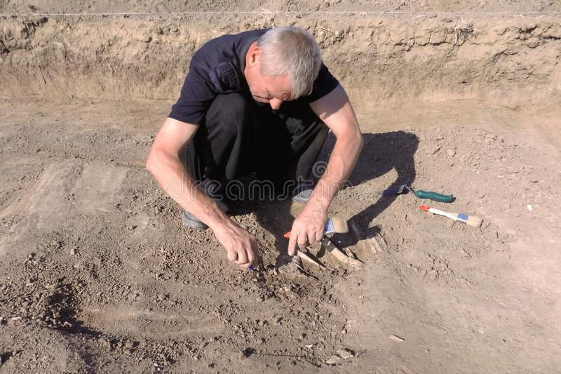 Archaeological excavation. The archaeologist in a digger process, researching the tomb, human bones, part of skeleton and skull in royalty free stock photography