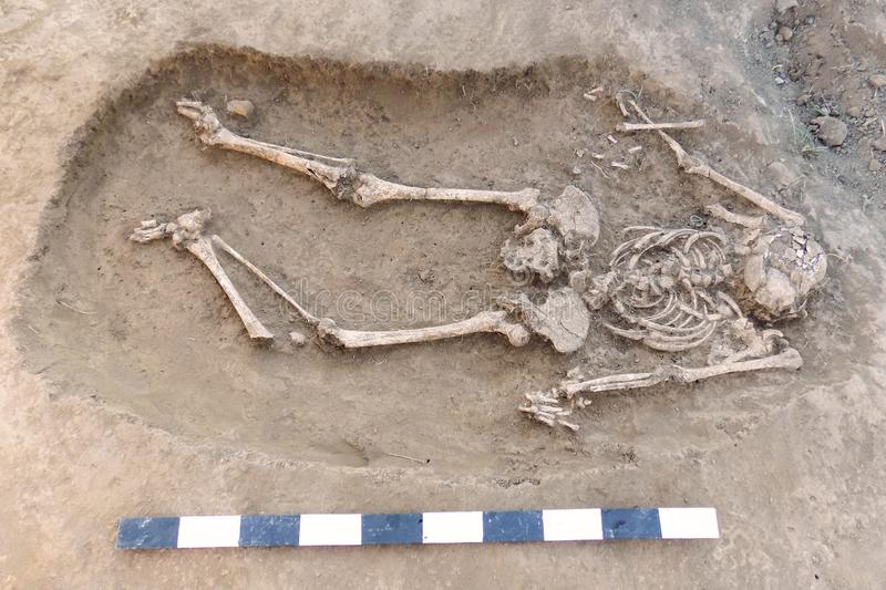 Archaeological excavation. Human remains bones, skeleton and skull in the ground, with little founding artefacts in the tomb and. Measure scale. Outdoors, copy stock image