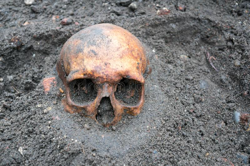 Archaeological excavation with skull still half buried in the ground royalty free stock images