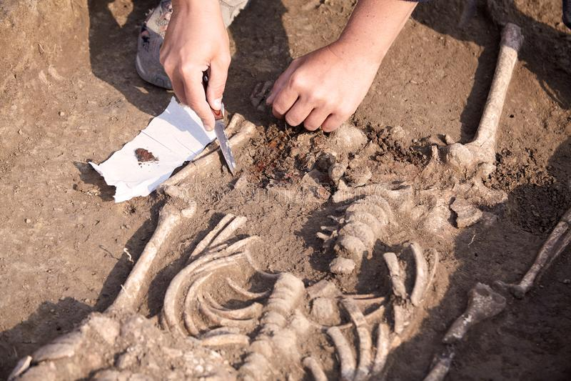archaeological park för paphos för cyprus utgrävningkato Arkeologen i en grävareprocess som forskar gravvalvet, mänskliga ben, de fotografering för bildbyråer