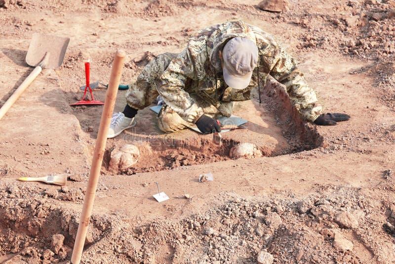 archaeological utgrävning Arkeologen som för forskning på mänskliga ben, del av skelettet från jordningen, med hjälpmedelsho arkivfoto