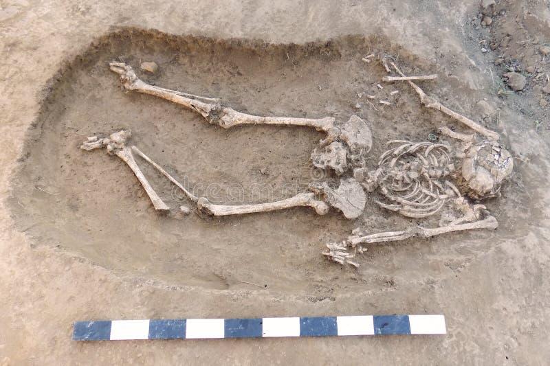 archaeological utgrävning Mänskliga återstår ben, skelettet och skallen i jordningen, med små grunda artefacts i gravvalvet och fotografering för bildbyråer