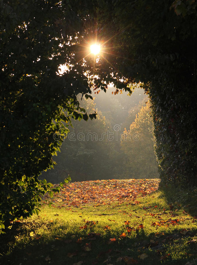 Arched alleyway in the forest, view to sunny clearance. Magic scenery in the wood stock photo