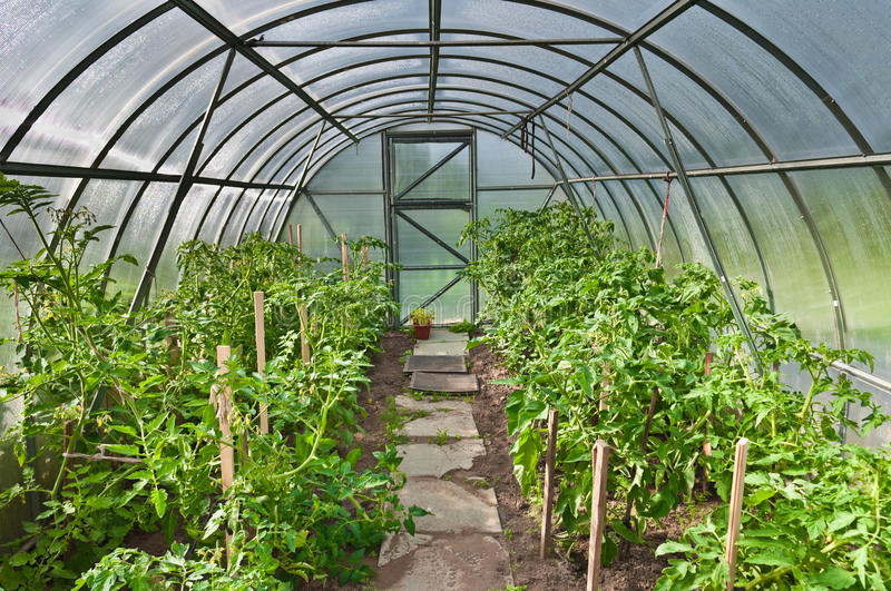 Arched greenhouse stock image