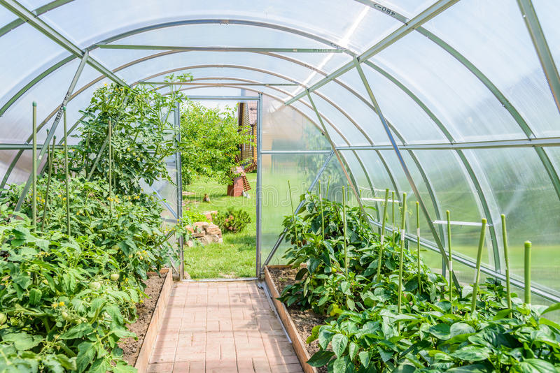 Arched greenhouse royalty free stock photo