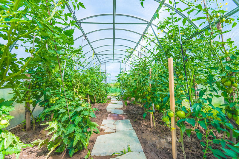 Arched greenhouse royalty free stock photography