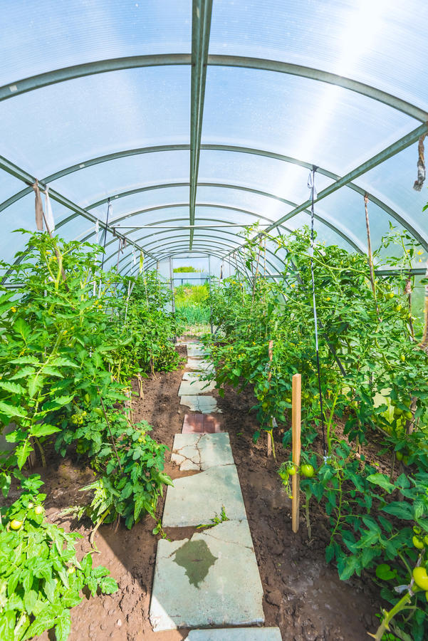 Arched greenhouse royalty free stock images
