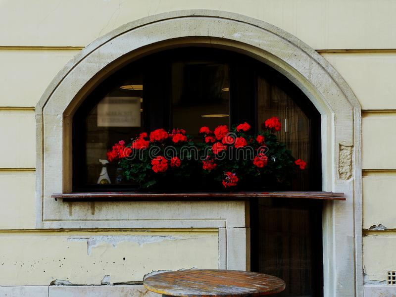 Arched restaurant window with decaying sill and red geraniums stock photos