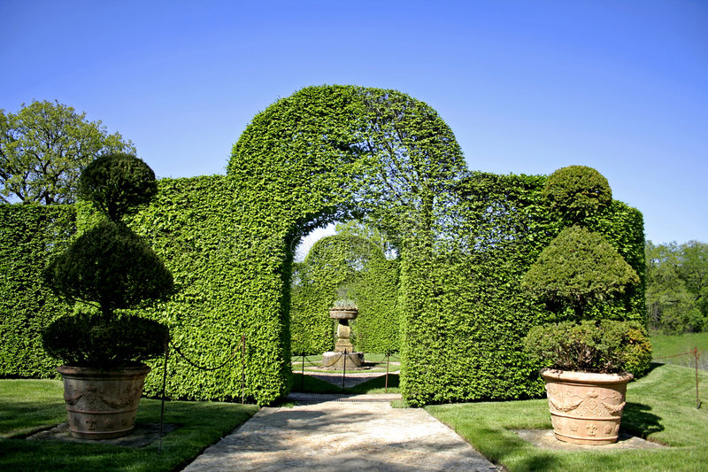 Arched schurbs in garden royalty free stock photo