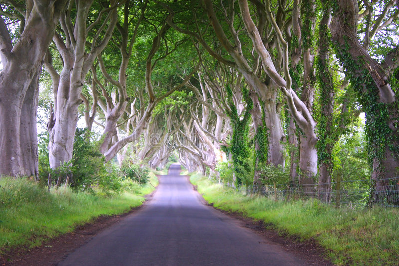 Download Arched trees stock image. Image of trees, forest, exterior - 7357879