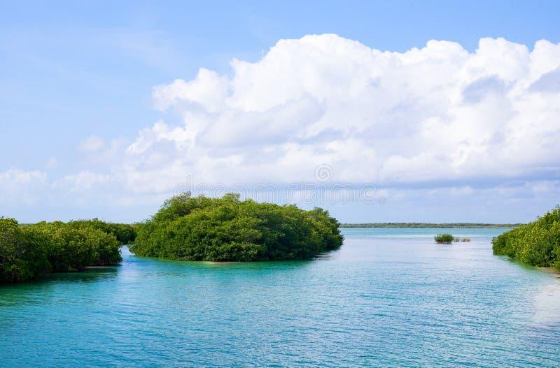 Archeologia e natura della penisola di Yukatan fotografia stock