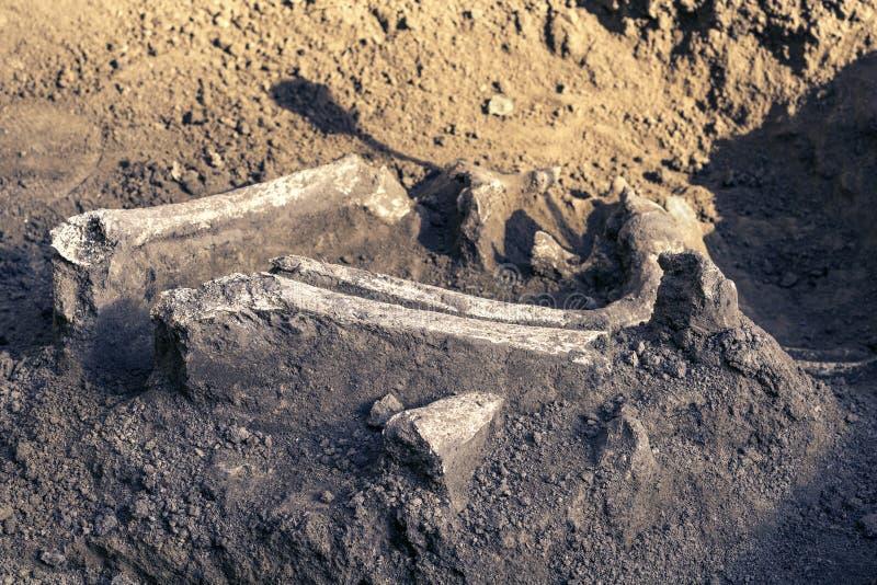 Archeologiczne ekskawacje i znalezisko kości kościec w ludzkim pogrzebie, szczegół antyczny badanie, prehistoria zdjęcia stock