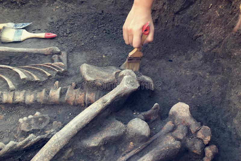 archeologiczny cibory ekskawacj kato paphos park archeolog z narz?dzi zachowaniami bada na ludzkim pogrzebie, ko?ciec, czaszka zdjęcie stock