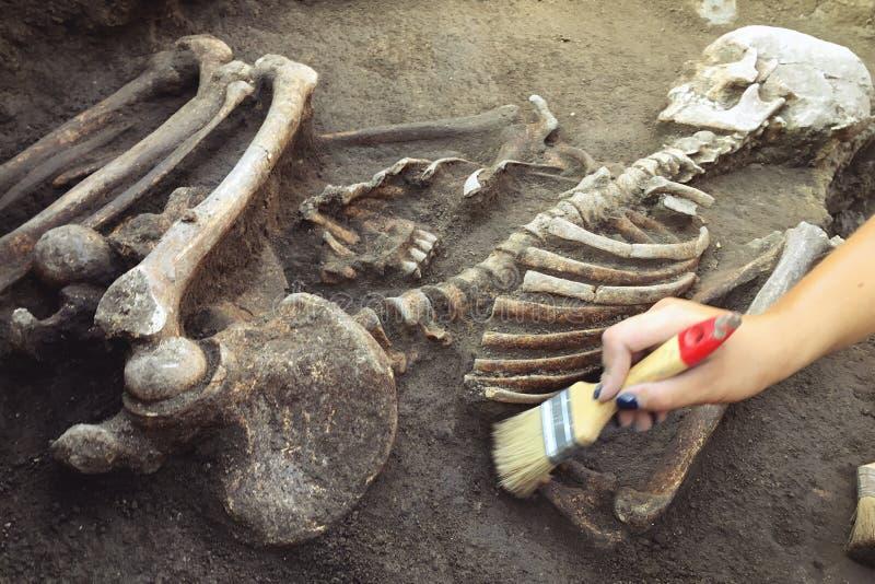 archeologiczny cibory ekskawacj kato paphos park archeolog z narz?dzi zachowaniami bada na ludzkim pogrzebie, ko?ciec, czaszka zdjęcia royalty free