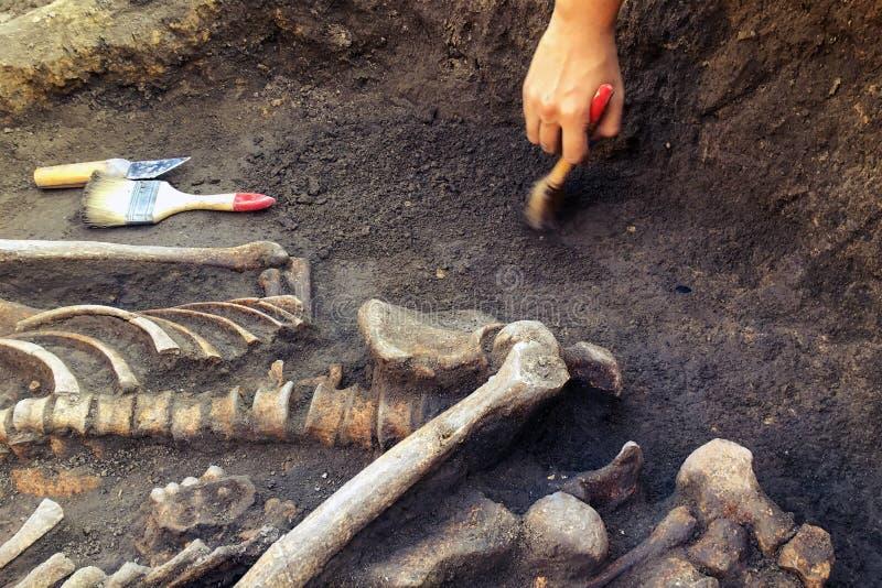 archeologiczny cibory ekskawacj kato paphos park archeolog z narz?dzi zachowaniami bada na ludzkim pogrzebie, ko?ciec, czaszka obraz royalty free