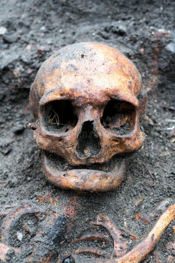 Archeologische die uitgraving met schedel nog half in de grond wordt begraven stock afbeeldingen