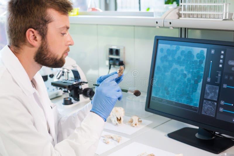 Archeologo in laboratorio di ricerca naturale Animali da pulizia di un assistente di laboratorio Archeologia, zoologia fotografia stock libera da diritti