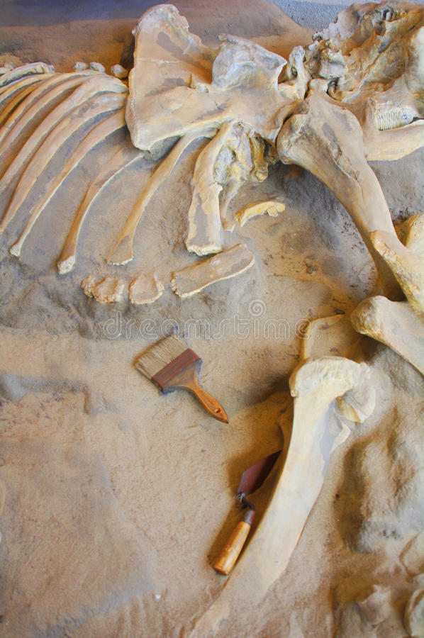 Archeology dig. For ancient animal and ocean creature bones stock photos