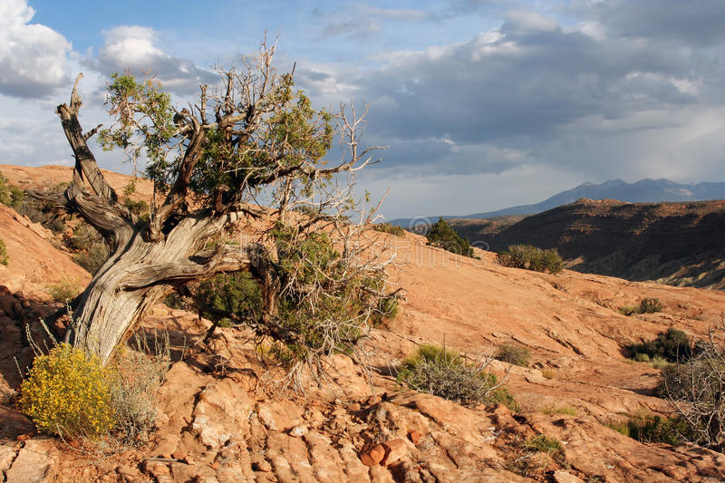 Download Arches National Park stock photo. Image of desert, attractions - 21423116