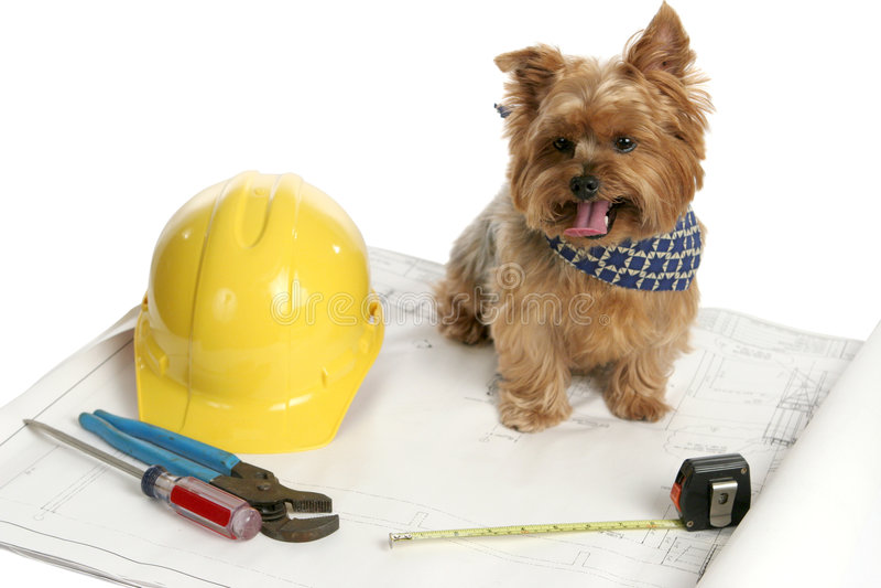 Architecte canin photo stock