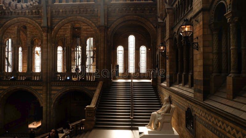 Architecture intérieure et décoration du musée d'histoire naturelle, le centre d'excellence du R-U des collections en taxonomie e image libre de droits
