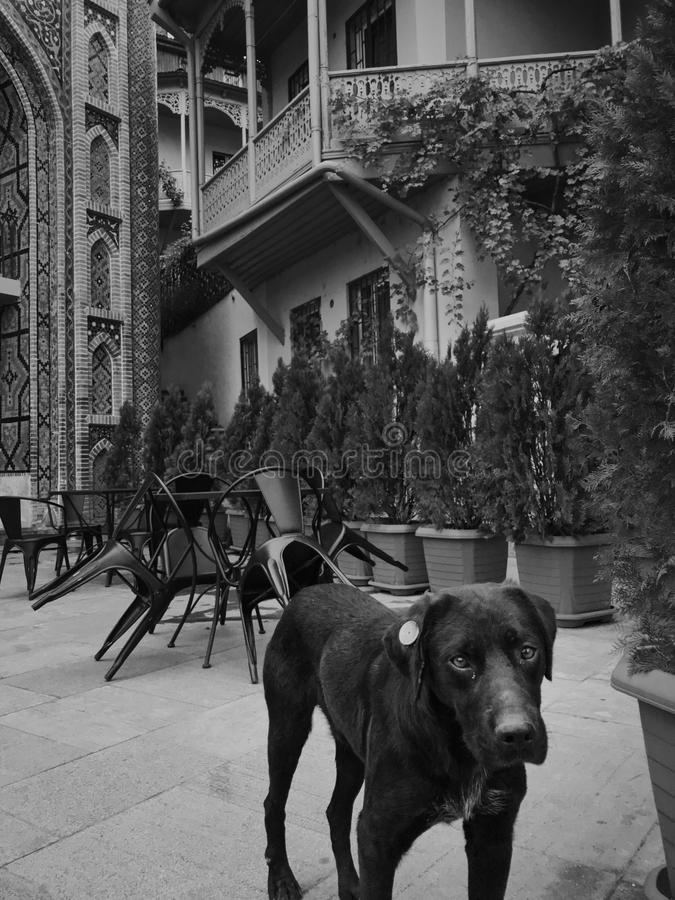 Architecture of the Old Town of Tbilisi, Georgia, in Abanotubani area - Tbilisi, Georgia. Homeless dog near Juma Mosque and arabic style building in Old Tbilisi stock photo