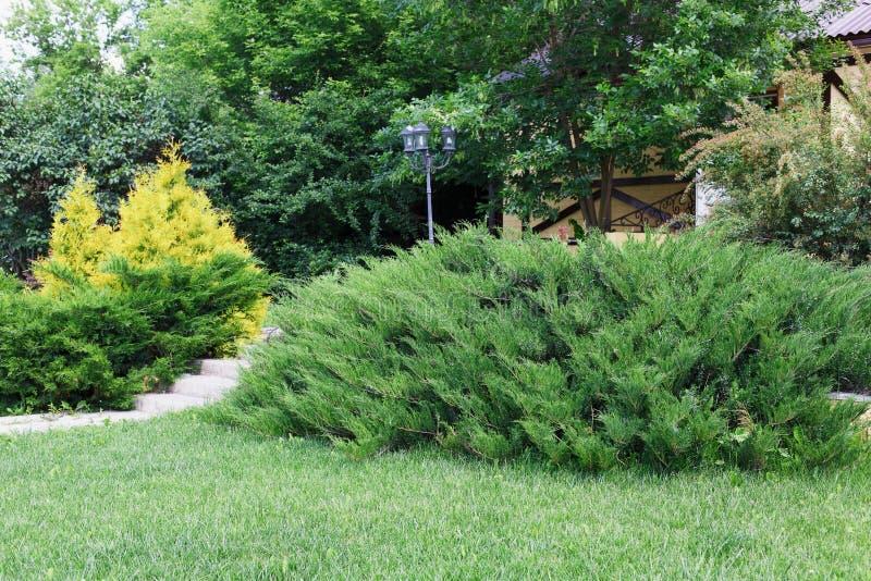 Architettura del p saggio cespugli sempreverdi e percorso fotografia stock immagine di - Arbusti sempreverdi da giardino ...